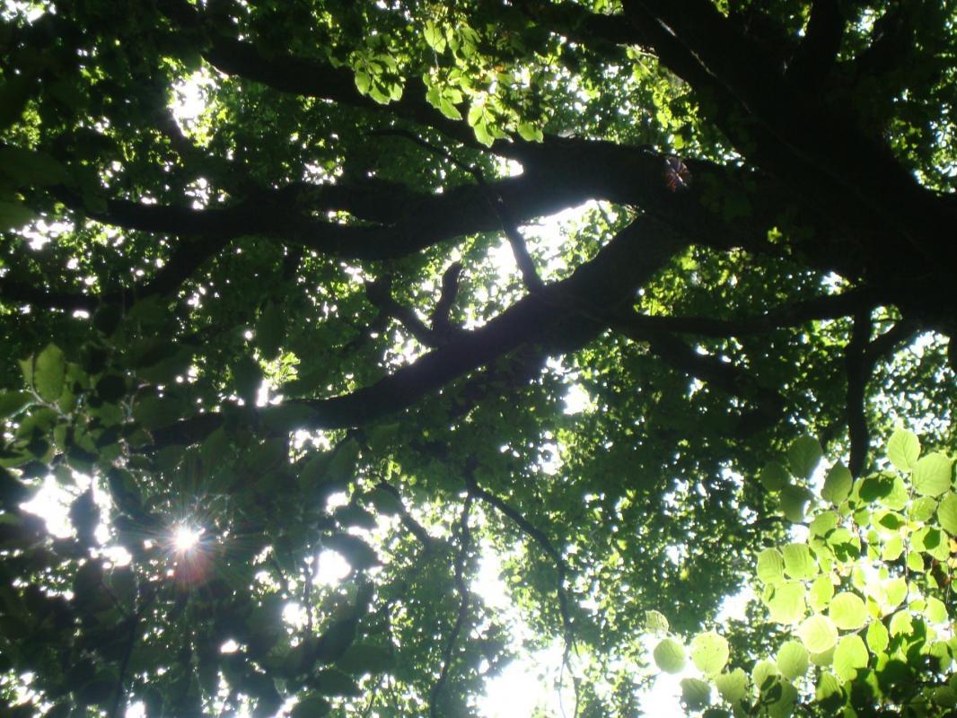 atelier cannelle.com (17) - photo arbre