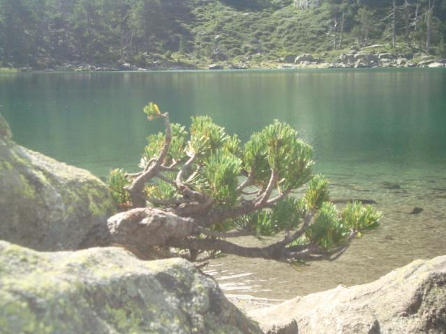 atelier cannelle.com  (17)- photo arbre