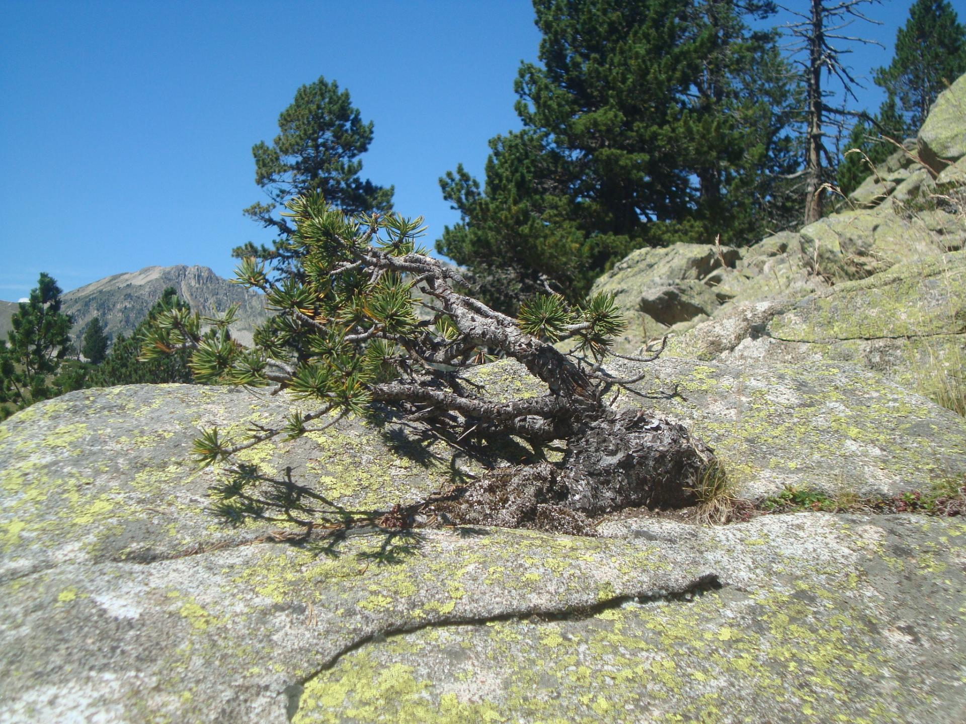 www.ateliercannelle.com - wild Bonsai Pyrennées France